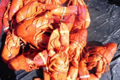 Lobsterfest 2011